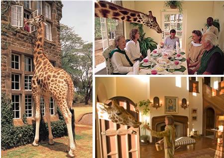 a96696_a457_giraffe