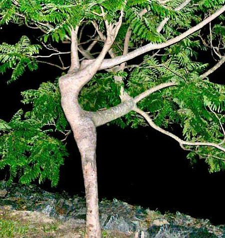 a96758_dancer-in-the-tree